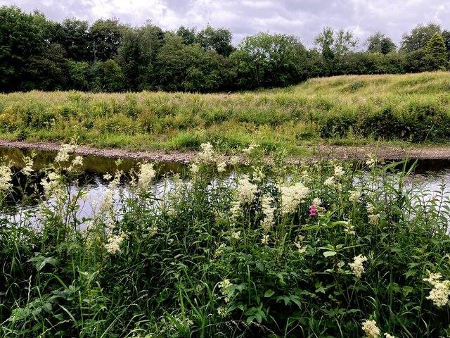 Meadowsweet, Cranny