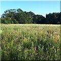 TG0228 : Wildflower area by small brook by Hugh Venables
