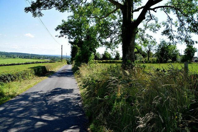 Tree shadows along Dunmullan Road