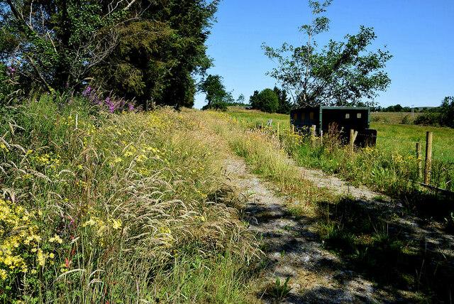 Lane to field, Ballynamullan