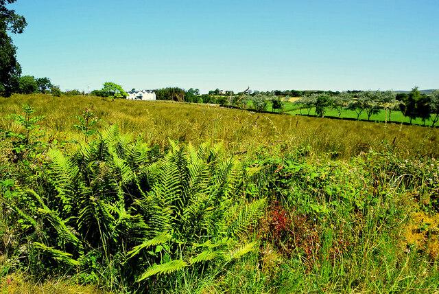 A rushy field, Tirquin