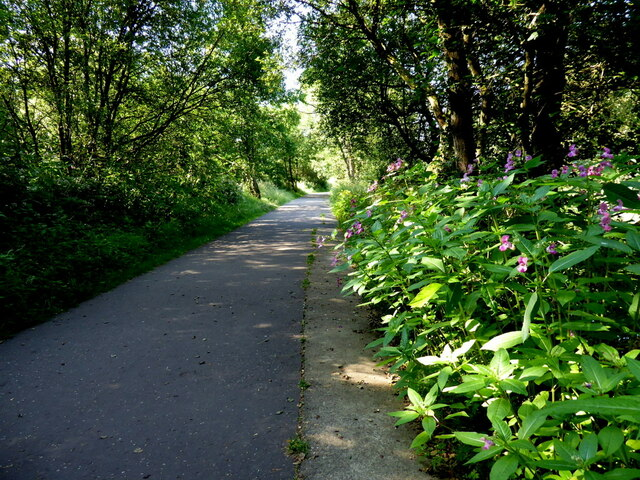 Shady along the Highway to Health path