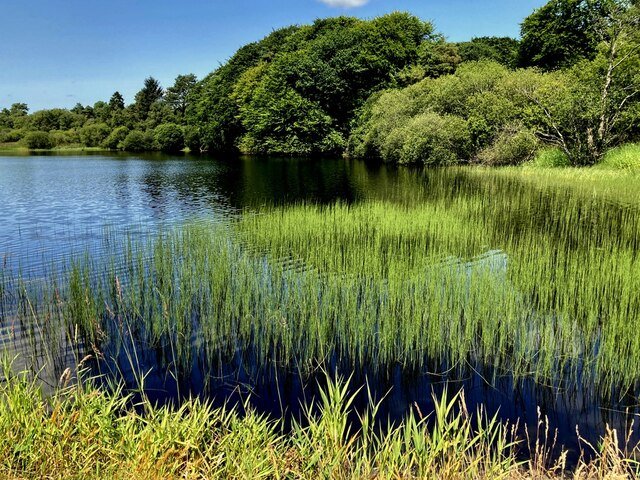 Reeds, Loughmacrory