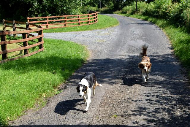 Friendly dogs, Recarson