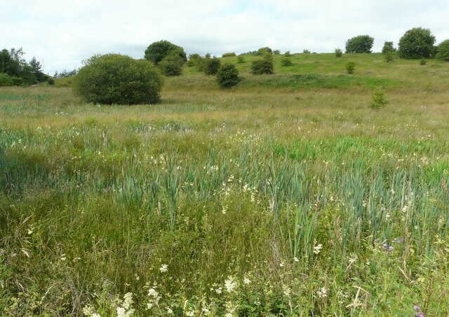 Wet grassland east of Robroyston Road