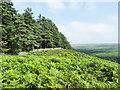 NZ0327 : Bracken-covered hill slope by Trevor Littlewood