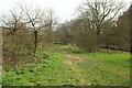 SX8159 : Path, Longmarsh by Derek Harper