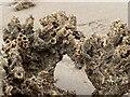 SS8376 : Sand worm cast by Alan Hughes