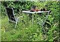 TQ7818 : No Mow May in July 2021 at South View, Churchland Lane by Patrick Roper