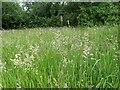 TF0820 : Long grass by Bob Harvey