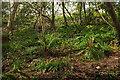 SX9065 : Wooded hillside, Shiphay Plantation by Derek Harper