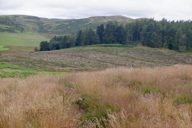 Replanting Roeglen Wood