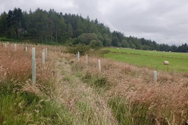 Quadbike tracks, Roeglen Wood by Richard Webb