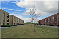 TL4354 : Trumpington Meadows: once The Varsity Line by John Sutton