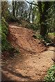 SX8863 : Biking track. Scadson Plantation by Derek Harper
