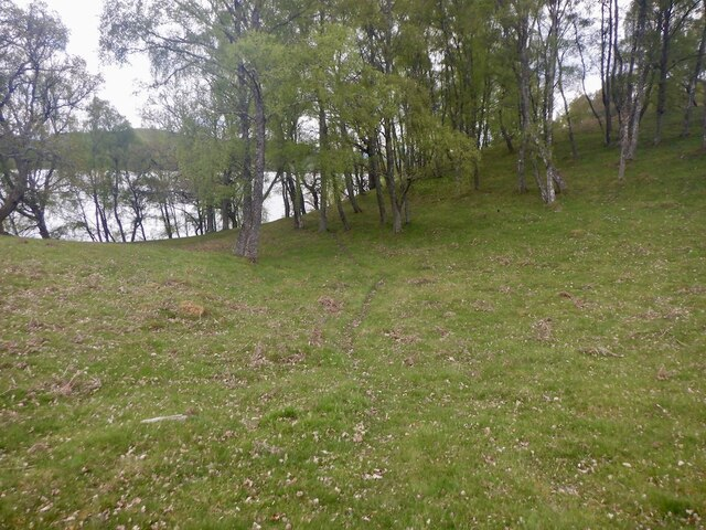 Woodland beside Loch Insh