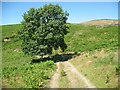 SD2891 : Ash tree near Stable Harvey Moss by Adrian Taylor