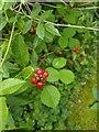 TF0820 : Red plenty by Bob Harvey