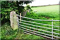 NY5439 : Field gateway on west side of the B6412 north of Woodside by Roger Templeman