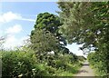 NZ1548 : Trees along the old railway by Robert Graham
