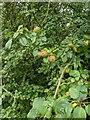 TF0820 : A fine developing crop by Bob Harvey