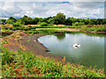 NY0565 : Caerlaverock Wetland Centre, Whooper Pond by David Dixon