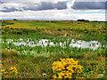 NY0565 : Caerlaverock Wetland Centre, View from the Wildlife Garden by David Dixon