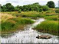 NY0565 : Teal Pond, Caerlaverock Wetland Centre by David Dixon