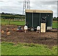 SO7804 : Free-range chickens in Middlehall Farm, Eastington, Gloucestershire by Jaggery