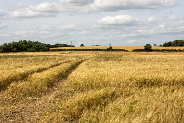 A field in the Money Hill region, Ashby-de-la-Zouch