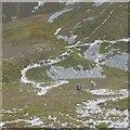 NN9371 : Bràigh Coire Chruinn-bhalgain / Carn Liath col by Richard Webb