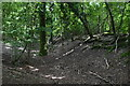 ST9919 : Iron Age earthwork in Mistleberry Wood by David Martin