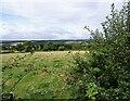 NZ0953 : Grazing field beside West Law Lane by Robert Graham