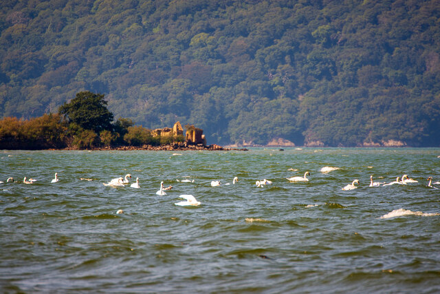 Swans and the Penrhyn Baths