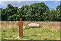 TQ2056 : Jutland Wood by Ian Capper