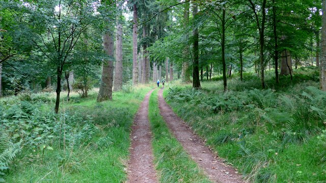 Forest track on the Invermay estate by Gordon Brown