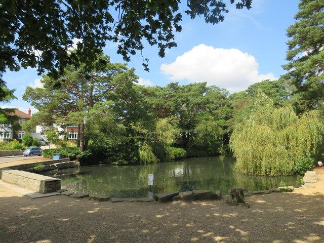 Coy Pond, near Bournemouth