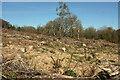 SX8283 : Felled area, Waye Down by Derek Harper