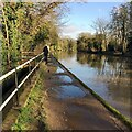 SP2965 : Puddles in the towpath, Grand Union Canal, Warwick by Robin Stott