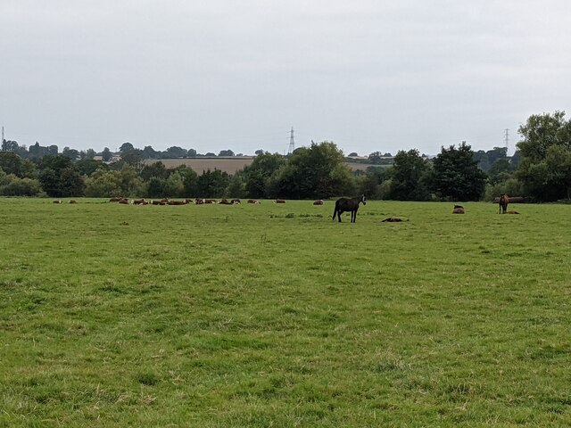 Animals by Sellack Common