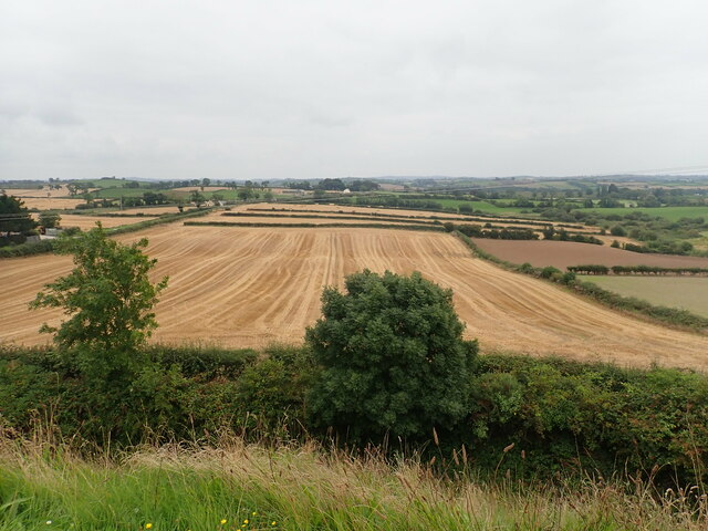 Straw waiting to be baled after the grain harvest