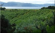 NR9379 : Ferns and Loch Fyne by Thomas Nugent