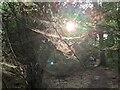 TF0820 : Backlit webs by Bob Harvey