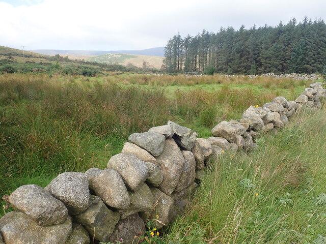 Northern stand of Crocknafeola Wood