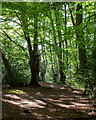 TQ4298 : Path through the pollards - Epping Forest near Golding's Hill by Roger Jones