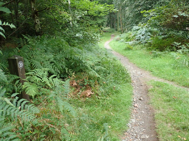 Pony tracking paths near the National Outdoor Centre in Tollymore Park