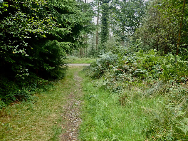 Horse path approaching a junction with a forest road