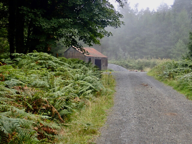 Tin roofed shed at a forestry road crossroads at Tollymore