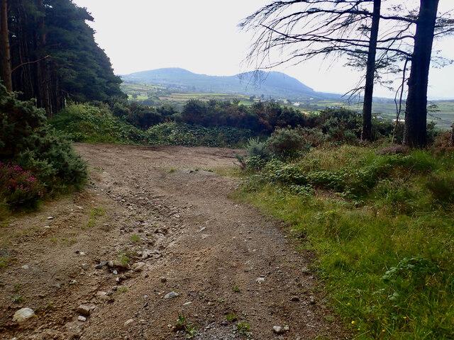 Path junction in Crocknafeola Wood