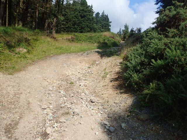 Signs of water erosion on path in Crocknafeola Wood